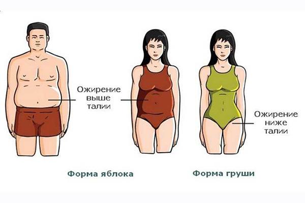 Ожирение вредно для организма
